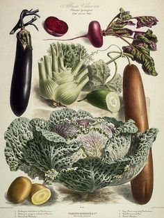 Vilmorin. Cabbage, eggplant, beet, fennel, cucumber, potato.