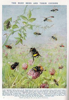 . by Cardboard Antlers, via Flickr Art And Illustration, Gravure Illustration, Botanical Illustration, Flower Illustrations, Illustration Botanique, I Love Bees, Bee Skep, Vintage Bee, Bee Art