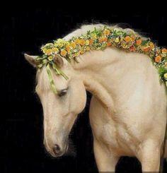 Hermosa crin de este caballo