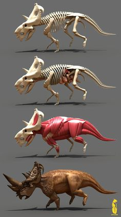 pachyrhinosaurus_anatomy_by_epic3d.jpg (400×717) Bit of a skinny Ceratopsian, especially with that head gear, but useful ref!