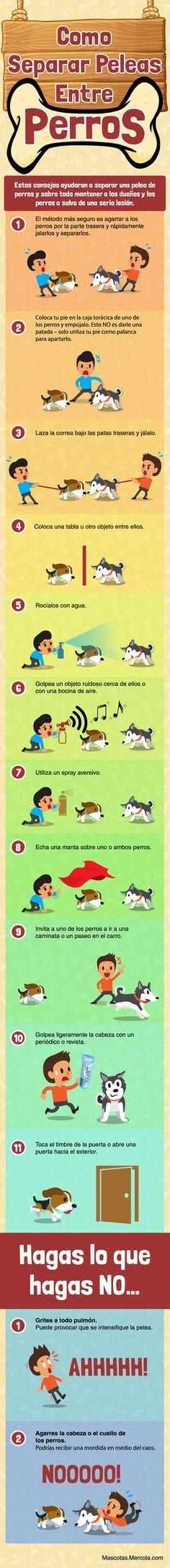 Descubre la mejor manera de separar una pelea de perros a través de esta infografía. Estos consejos te ayudaran a mantenerte a ti y a tus mascotas a salvo de una seria lesión. http://mascotas.mercola.com/infografias/como-separar-una-pelea-de-perros.aspx