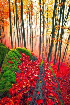 Red Forest, Germany