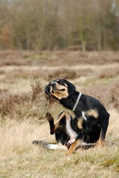 Natural Ingredients to Soothe a Dog's Itchy Skin | Ruff Ideas