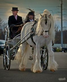 Horse and buggy from reception - Photo by Elizabeth Ward Sescilla Pretty Horses, Beautiful Horses, Horse Harness, Horse Wedding, Horse And Buggy, Horse Carriage, Gypsy Wagon, Unusual Things, Animal 2