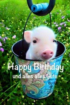 Send the best and funniest pictures for your birthday ›Whatsapp pictures - Geburtstag Happy Birthday Meme, Birthday Greetings, It's Your Birthday, Teacup Piglets, Cute Piglets, Pet Pigs, Baby Pigs, Whatsapp Pictures, Mini Pigs