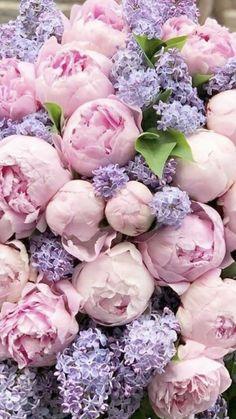 All Flowers, My Flower, Fresh Flowers, Beautiful Flowers, Wedding Flowers, Flowers Online, Beautiful Flower Arrangements, Floral Arrangements, Flores Wallpaper
