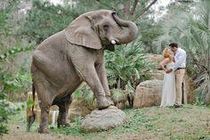Um...an elephant at my wedding?   Yes, please.   Pasha Belman Photography