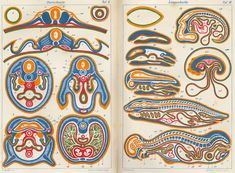 """This image from Ernst Haeckel's 1874 The Evolution of Man shows comparisons between cross-sections of different animals and their embryos at different stages of development. For Haeckel the development of an embryo retraced the evolutionary history of the animal. The different colors represent the four types of tissues out of which all the organs formed. Ernst Haeckel. Anthropogenie, oder, Entwickelungsgeschichte des Menschen. Leipzig: W. Engelmann. 1874."" – link"