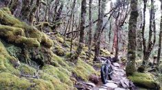Bikerumor Pic Of The Day: Dragon's Creek - New Zealand
