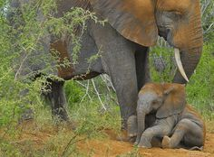 Our beautiful Eles