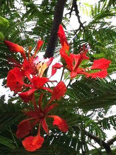 The aptly named Flamboyant tree