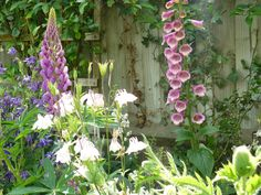 My garden early  summer...