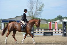 Dressage judge Karen McGoldrick talks to this rider about her horses dressage potential.