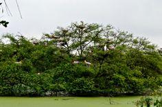 Keoladeo National Park in Bharatpur, Rājasthān Beautiful bird sanctuay visit after monsoon or in winters.