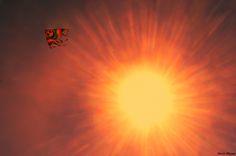 Alexis Shyam - Kite in the sky