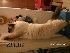 Olio di #krill per il gatto e il cane