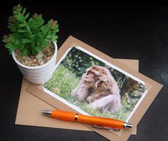 Handmade Card, photo note cards, Barbary macaque monkey print, photo greeting cards, 7 x 5 blank note cards, photo cards, photography cards by SJEPhotography on Etsy