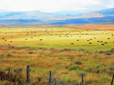 Golden hues at harvest time in Routt County, CO. (Photo submitted by John Cunningham)