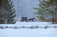 Amish buggy and split rail fence.