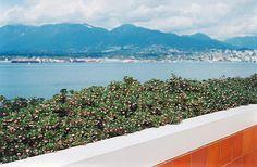 Find Vancouver Jade Bearberry (Arctostaphylos uva-ursi 'Vancouver Jade') in Issaquah Seattle Bellevue Redmond Renton Sammamish Washington WA at Squak Mountain Nursery (Kinnikinik)
