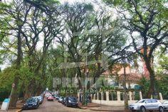 """A rua Gonçalo de Carvalho ganhou fama de ser """"a mais bonita do mundo"""" na internet. As duas calçadas são cheias de árvores, de ponta a ponta. Seria bom fotografá-la também do alto de algum prédio, porque as árvores formam uma espécie de cobertura verde."""