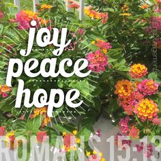 Romans 15:13 May the God of hope fill you with all joy and peace in believing, so that by the power of the Holy Spirit you may abound in hope.