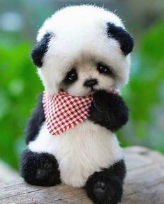 57 Best ideas for memes brasileiros animais Niedlicher Panda, Panda Eyes, Cute Panda, Panda Puppy, Baby Animals Super Cute, Cute Little Animals, Cute Funny Animals, Fluffy Animals, Animals And Pets