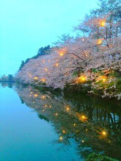 Takada Castle Cherry Blossom Night Views,Joetsu,Japan
