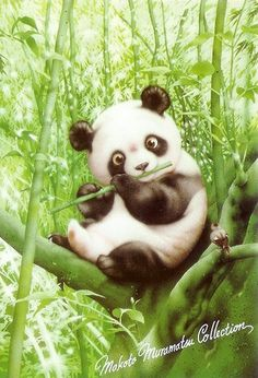 makoto muramatsu panda