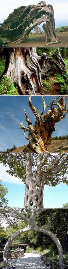 """微天下【组图:""""树木马戏团""""】在下面这些...@苍默君采集到树(287图)_花瓣"""