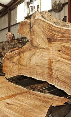 Tasmanian Blackwood ~ great table top slabs  Hearne Hardwoods ...LOVE these guys