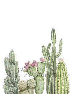 Positive Quotes Discover Assorted Cacti Framed and Unframed Watercolor Print Wall Art Home Decor Southwestern Art Nursery Decor Assorted Cacti Watercolor Print Wall Art Home Decor Cactus Painting, Watercolor Cactus, Cactus Art, Watercolor Print, Watercolor Paintings, Cactus Plants, Cactus Decor, Cacti, Painting Art
