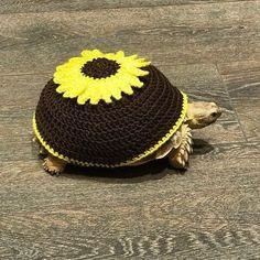 Yellow Sunflower Tortoise Top Sweater Cozy On Hand by TortoiseTops Tortoise Care, Tortoise Habitat, Turtle Habitat, Sulcata Tortoise, Turtle Sweaters, Russian Tortoise, Pet Turtle, Turtle Cage, Young Animal