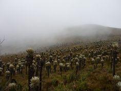 Santuario de Fauna y Flora Iguaque, Colombia
