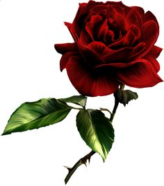 Painted Red Rose Clipart