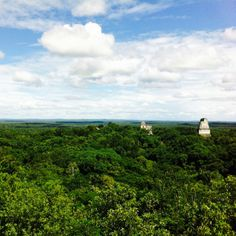 Tikal skyline