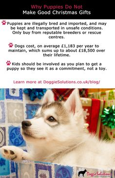 Why #Puppies Do Not Make Good #Christmas Gifts