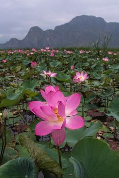 Sacre, Lotus Pond, Parc National, Past, Green, Planting Flowers, Environment, Baby Born, Photography