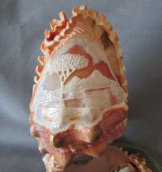 carved sea Shell - Bing images