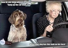 [Picture] Funny Dog Picture As A Passenger In Car - (click for full article) http://www.ilovedogsandcats.com/picture-funny-dog-picture-as-a-passenger-in-car/ -