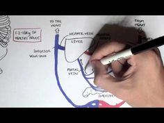 ▶ Liver Anatomy and Blood Supply - YouTube by Armando Hasudungan. great illustrastions