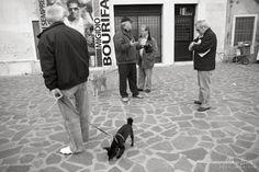 venice Street Photography, Venice, 1, Dogs, Animals, Animales, Animaux, Venice Italy, Pet Dogs