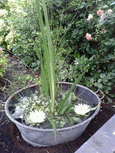 Eindelijk een minivijver in mijn tuin!