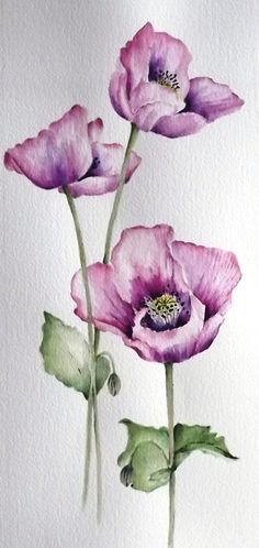 yards on the farm. I used to tear through, flapping my arms like a chook, knocking the petals off the poppies and watching them fly into the air like purple snow. Watercolor Poppies, Watercolor Cards, Watercolour Painting, Painting & Drawing, Watercolours, Watercolor Tattoo, Motif Floral, Arte Floral, Botanical Illustration