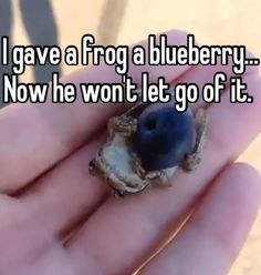 If you give a frog a blueberry...