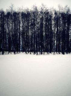 melisaki:  Natural Parallels photo by Camille Romano; Pispala, 2010