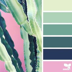 today's inspiration image for { cacti color } is by @greenineverycolor ... thank you, Tanja, for another incredible #SeedsColor image share!
