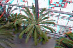 Hortus Leiden 3D