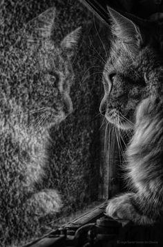 reflection Photo in Album Stream Photos - Photographer: jorge gomez de oliveira