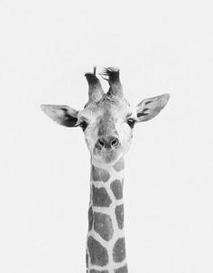 #giraffe #smile #grey #animal